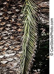 coco, Caribe, árboles