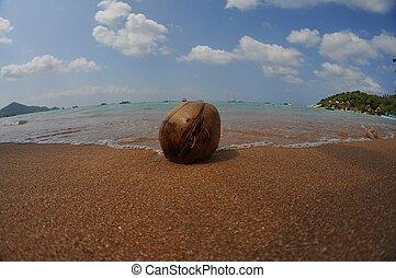 coco, en la playa