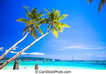 coco, filipinas, árbol, escamotee playa, arenoso