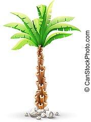 coco, hojas, árbol, tropical, verde, palma