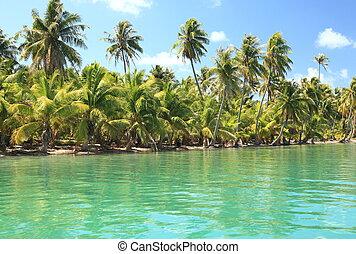 coco, ilha, turquesa, pacífico, dreamlike, árvores, water., sul
