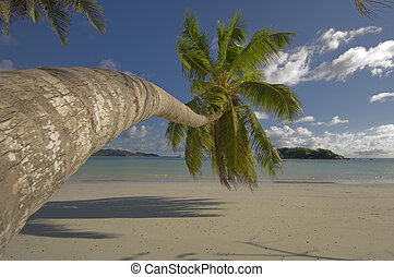 Palm tree overhang tropical beach, Seychelles