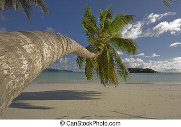 Coco palm tree - Palm tree overhang tropical beach,...