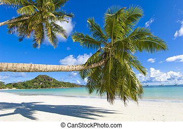 Coco palms - Palm trees overhang tropical beach
