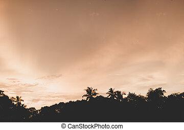 coco, praia., silueta, árvore, paraisos , crepúsculo, pôr do sol
