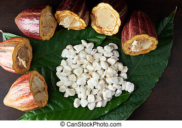 Cocoa agriculture background