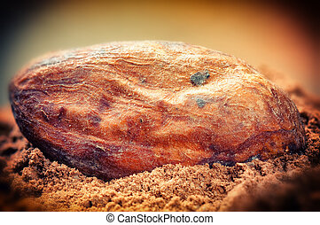 Cocoa bean and powder. Macro