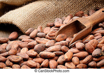 Cocoa beans and wooden scoop on wooden table