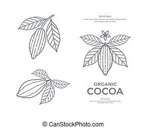 Cocoa beans icon