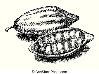 Cocoa beans illustration. Version