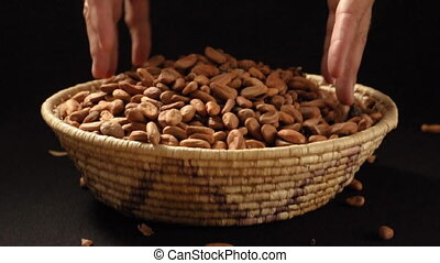 Cocoa beans - Man scoops up double handful of raw cocoa...