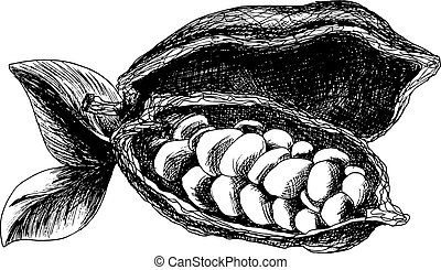 Cocoa beans sketch