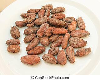 cocoa beans (theobroma cacao) from Madagascar