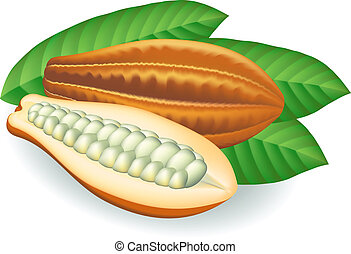 Cocoa beans. Vector illustration on white background.