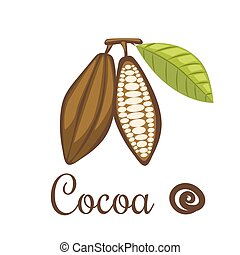 Cocoa beans vector illustration.