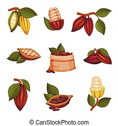 Cocoa Beans with Green Leaves Isolated on White Background...