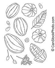 Cocoa fruit doodle vector illustration set