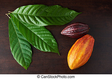 Cocoa leaves and pods