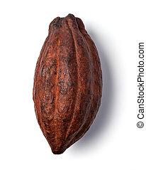 Cocoa pod on a white background