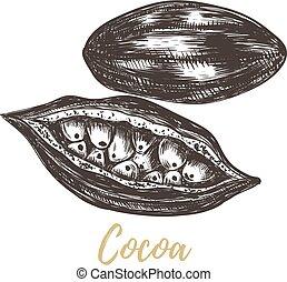 Cocoa sketch vector illustration.