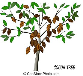 Cocoa tree with ripe fruits