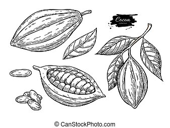Cocoa vector superfood drawing set.Organic healthy food sketch.
