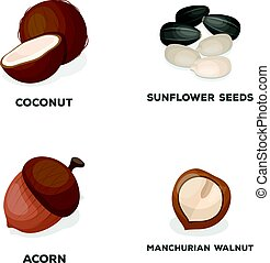 Coconut, acorn, sunflower seeds, manchueian walnut.Different kinds of nuts set collection icons in cartoon style vector symbol stock illustration web.