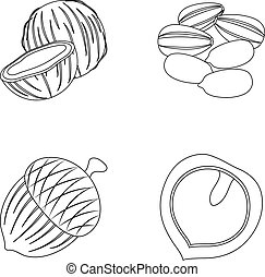 Coconut, acorn, sunflower seeds, manchueian walnut.Different kinds of nuts set collection icons in outline style vector symbol stock illustration web.