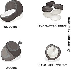 Coconut, acorn, sunflower seeds, manchueian walnut.Different kinds of nuts set collection icons in monochrome style vector symbol stock illustration web.