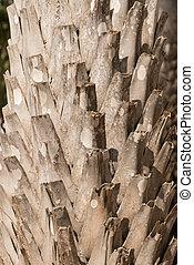 Coconut bark palm tree
