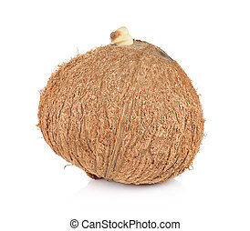 coconut closeup on a white background