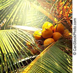Coconut - coconut