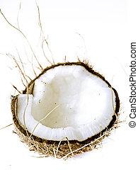 Coconut, Cocos nucifera