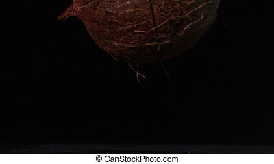 Coconut falling and splitting on black background in slow ...
