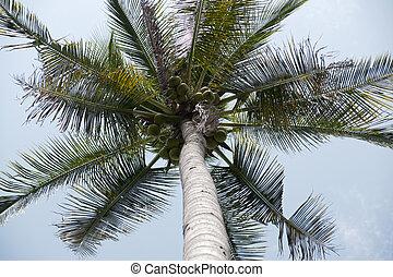 Coconut garden.