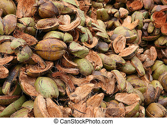 Coconut husks ready for processing at a copra factory in Sri Lanka.