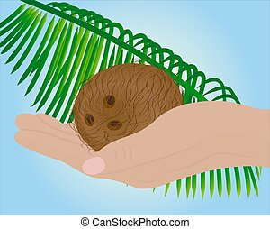 Coconut in a hand and palm leaf