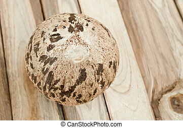 coconut isolated on wood background
