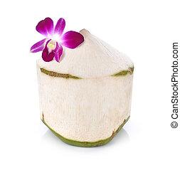 coconut juice on white background