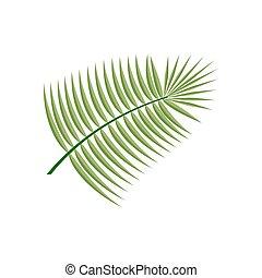 Coconut  Leaf Icon
