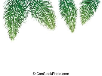 Coconut leaves isolated on white background vector illustration