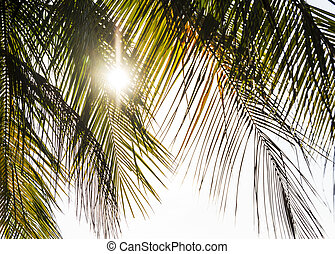 Coconut leaves with sunlight