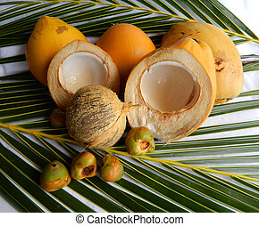 Coconut - Lifecycle - Coconuts from the smallest to a mature...