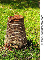 Coconut old stump in the grass.