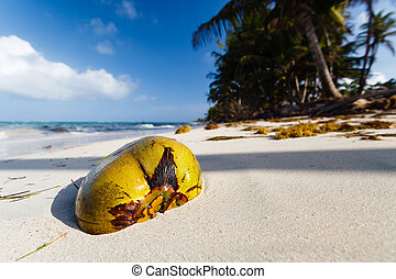 LITTLE CORN ISLAND, NICARAGUA: Ripe coconut sits half buried in the white sands of a deserted beach
