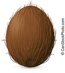 Coconut on a white background.