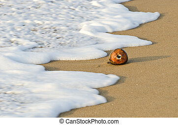 coconut on sea beach sand and wave in Asia