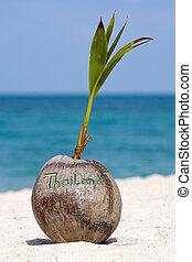 Coconut on the beach in Koh Phangan, Thailand