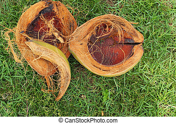 Coconut on the grass.