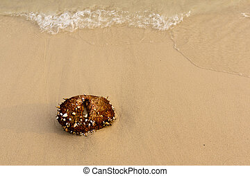 Coconut on the sea